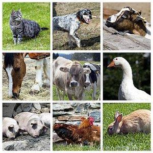 Gli animali nei sogni